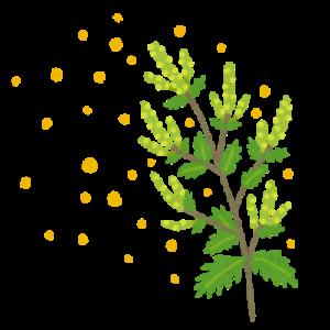 ブタクサ花粉